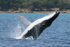 Whale Watching and Accommodation Package